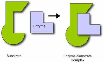 anabolic vs catabolic photosynthesis